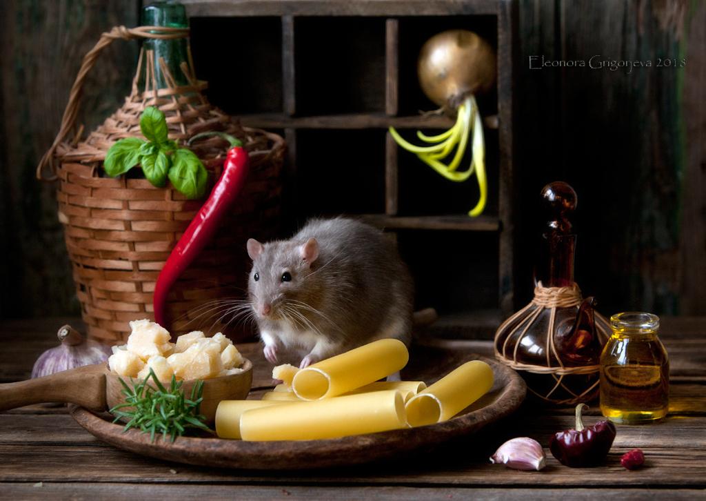 Год_крысы