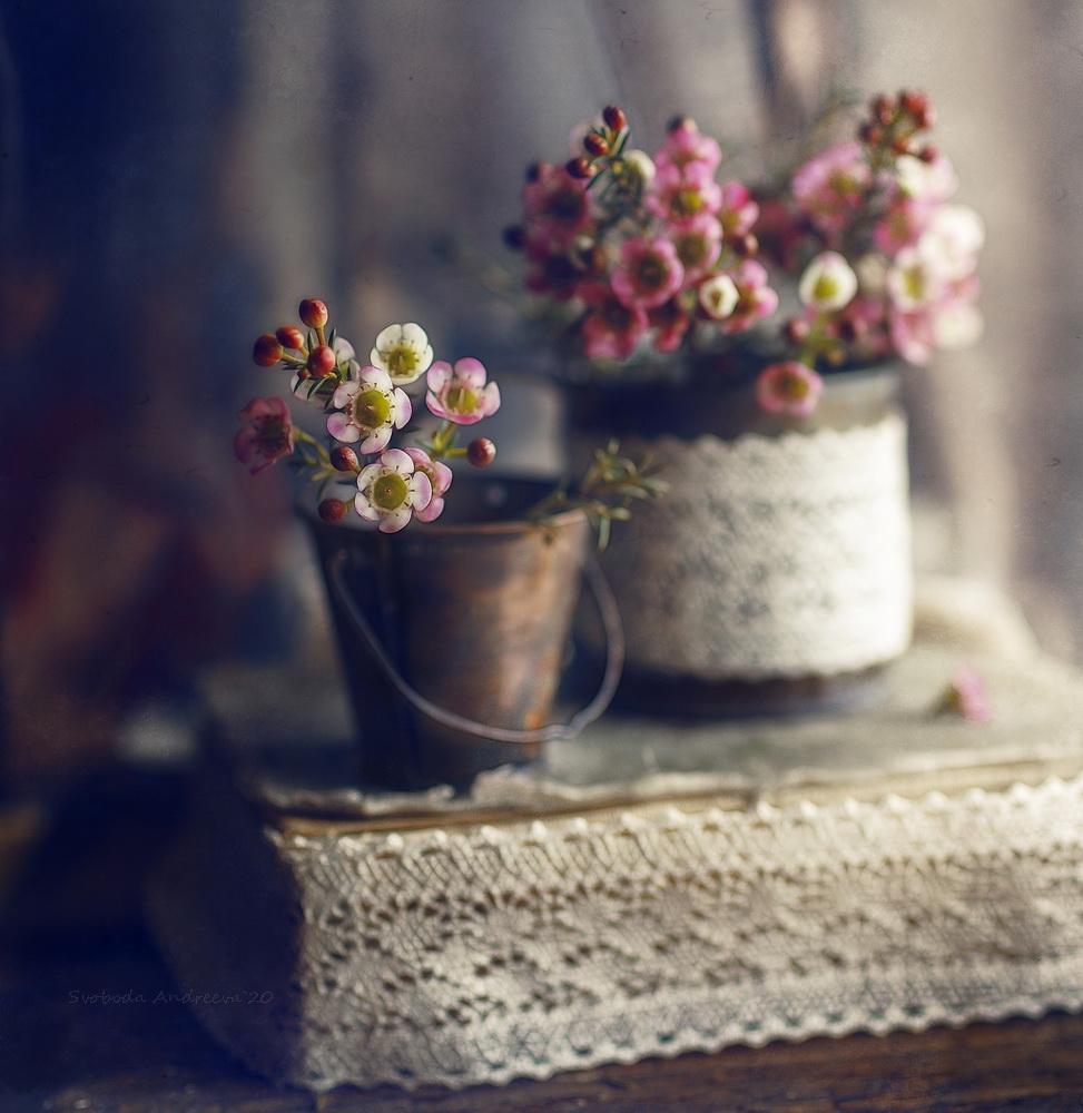 о розовом цветке/ фотограф Andreeva Svoboda