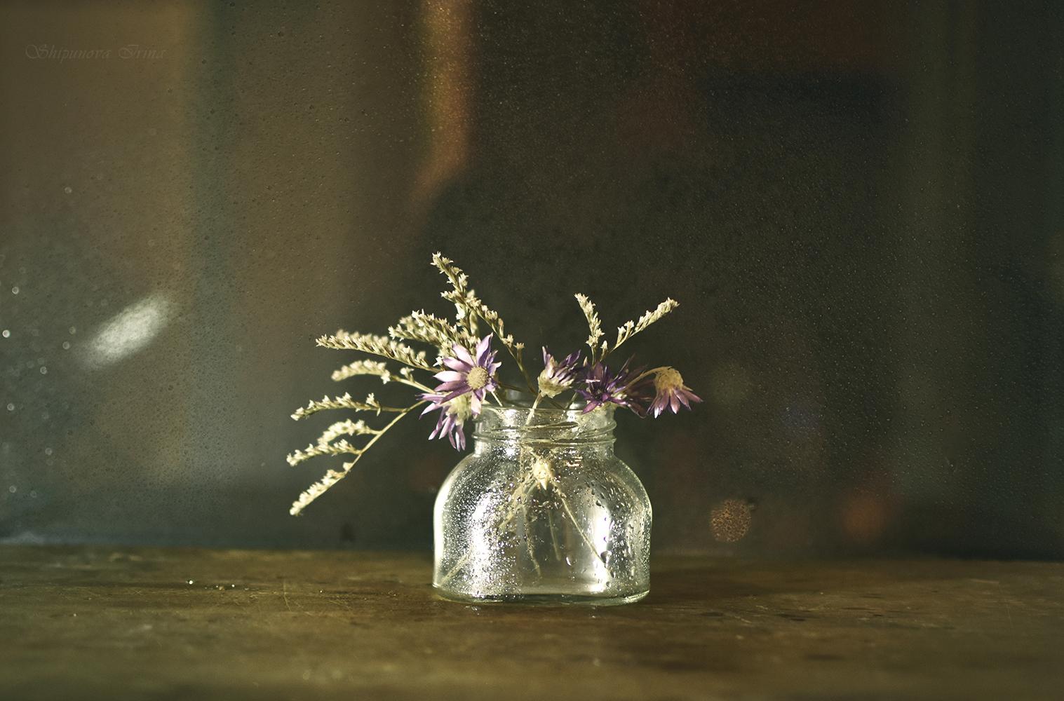 Мечты о весне / фотограф Шипунова Ирина
