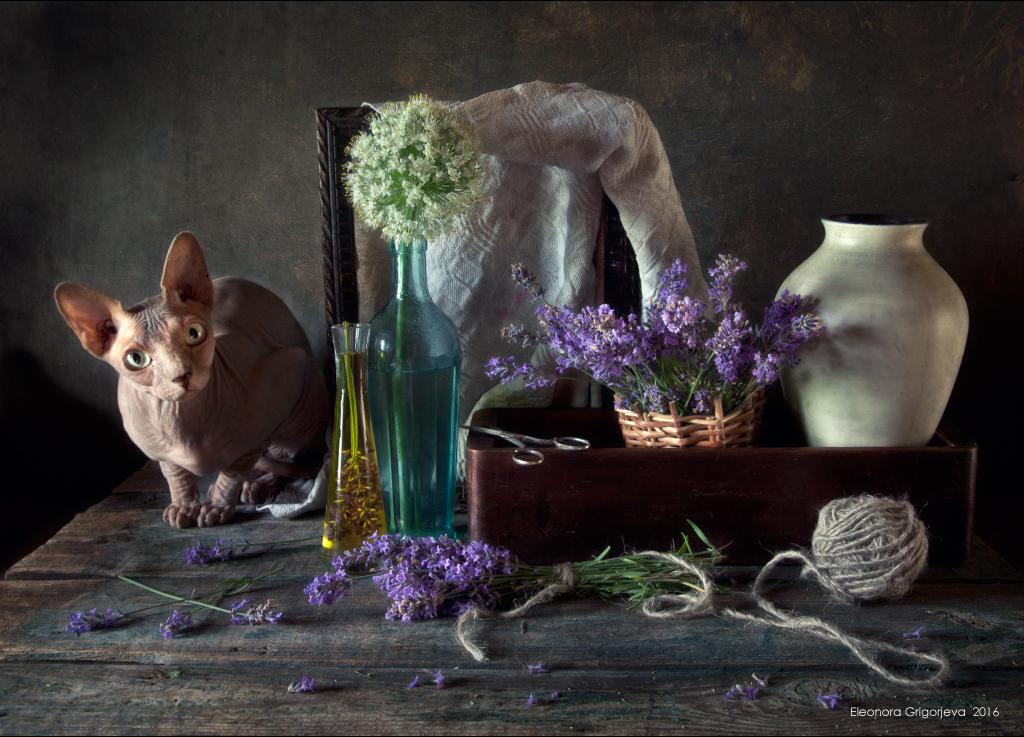 Оливия / фотограф Элеонора Григорьева