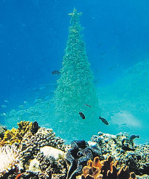 елка на Мальдивах