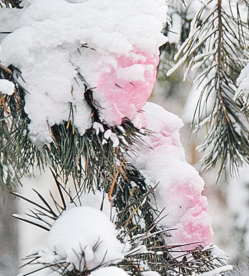 елка в Новосибирске
