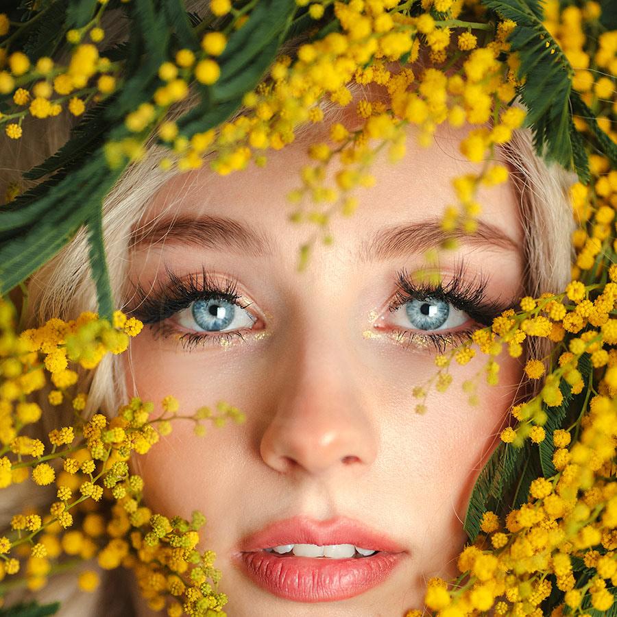 Mimosa Dream
