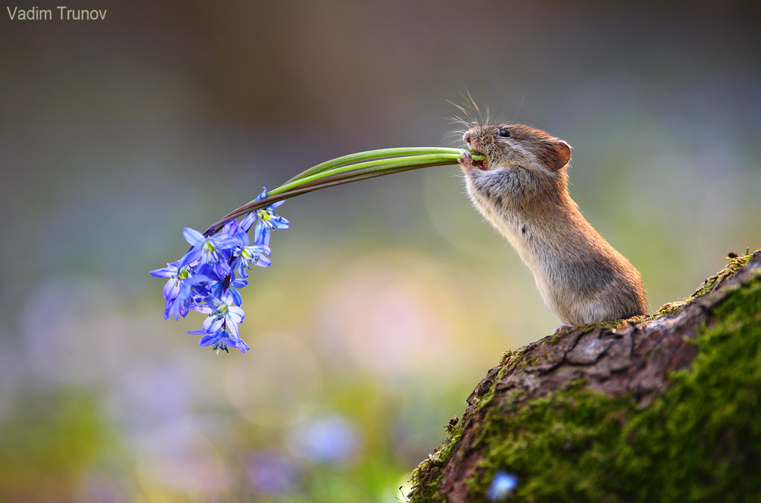 Сумасшедшая весна / фотограф Вадим Трунов
