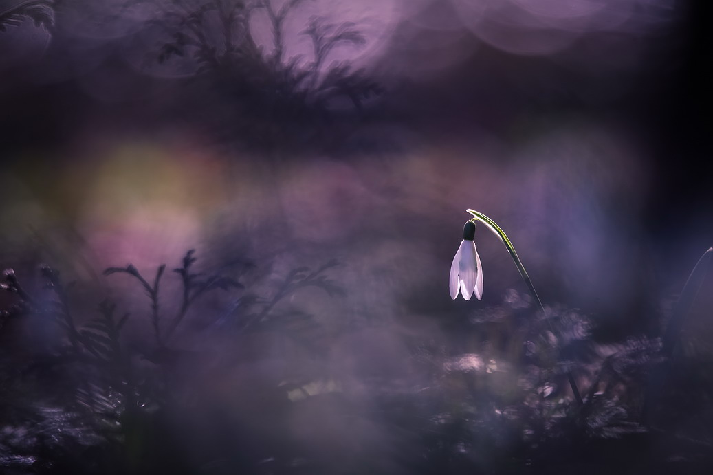 Весенние зарисовки / фотограф Вячеслав Мищенко