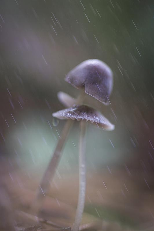 Из жизни грибов