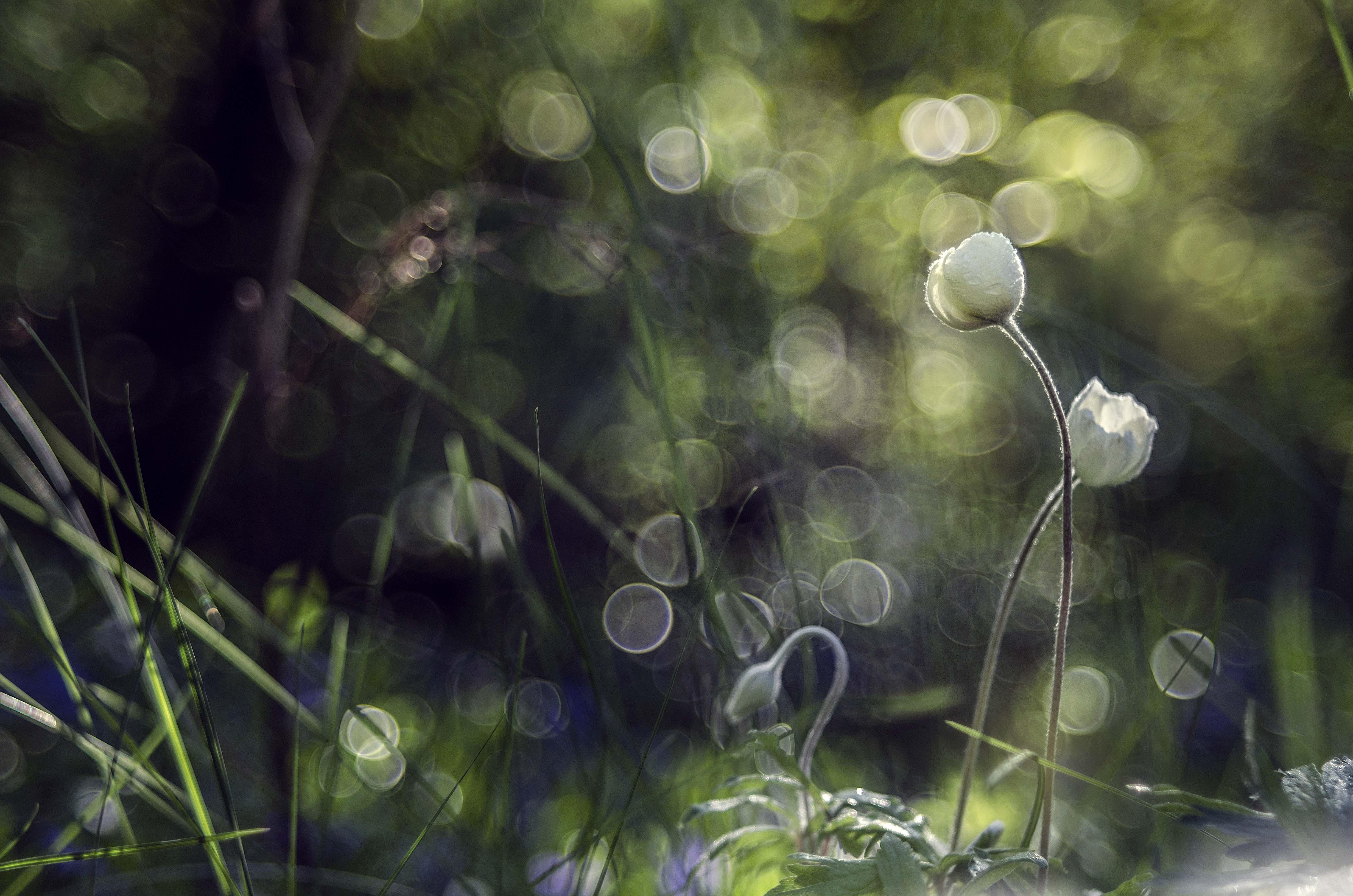 О любви / фотограф Лилия Немыкина