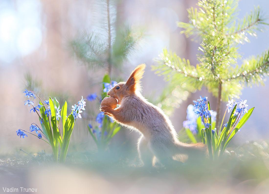 Весна и белочки / фотограф Вадим Трунов