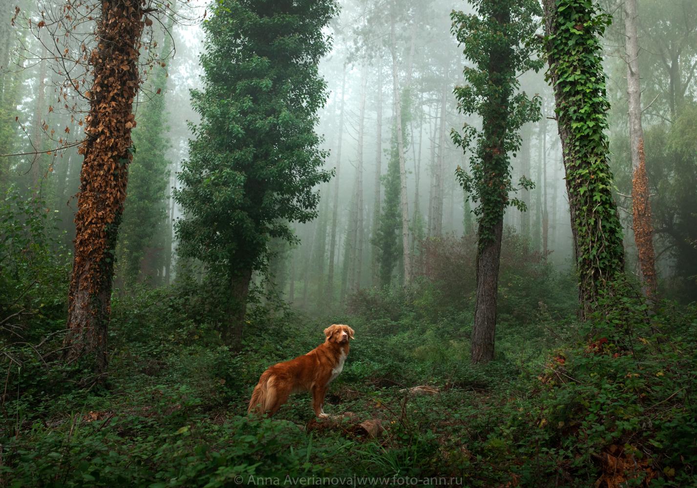 В лесу / фотограф Анна Аверьянова