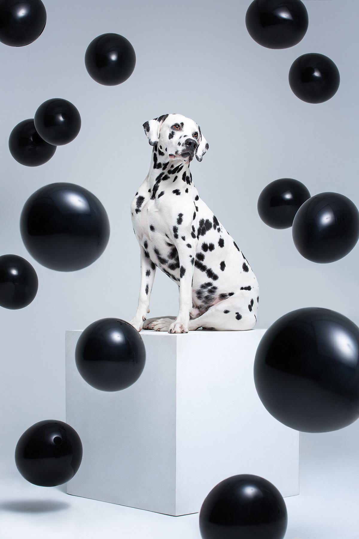 Dog_Show