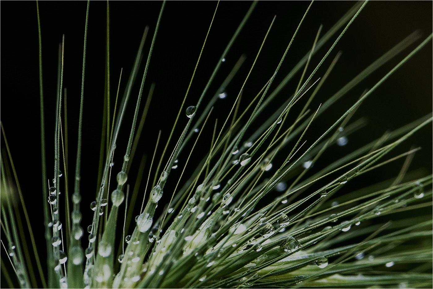dopo la pioggia / фото Paola Bottoni