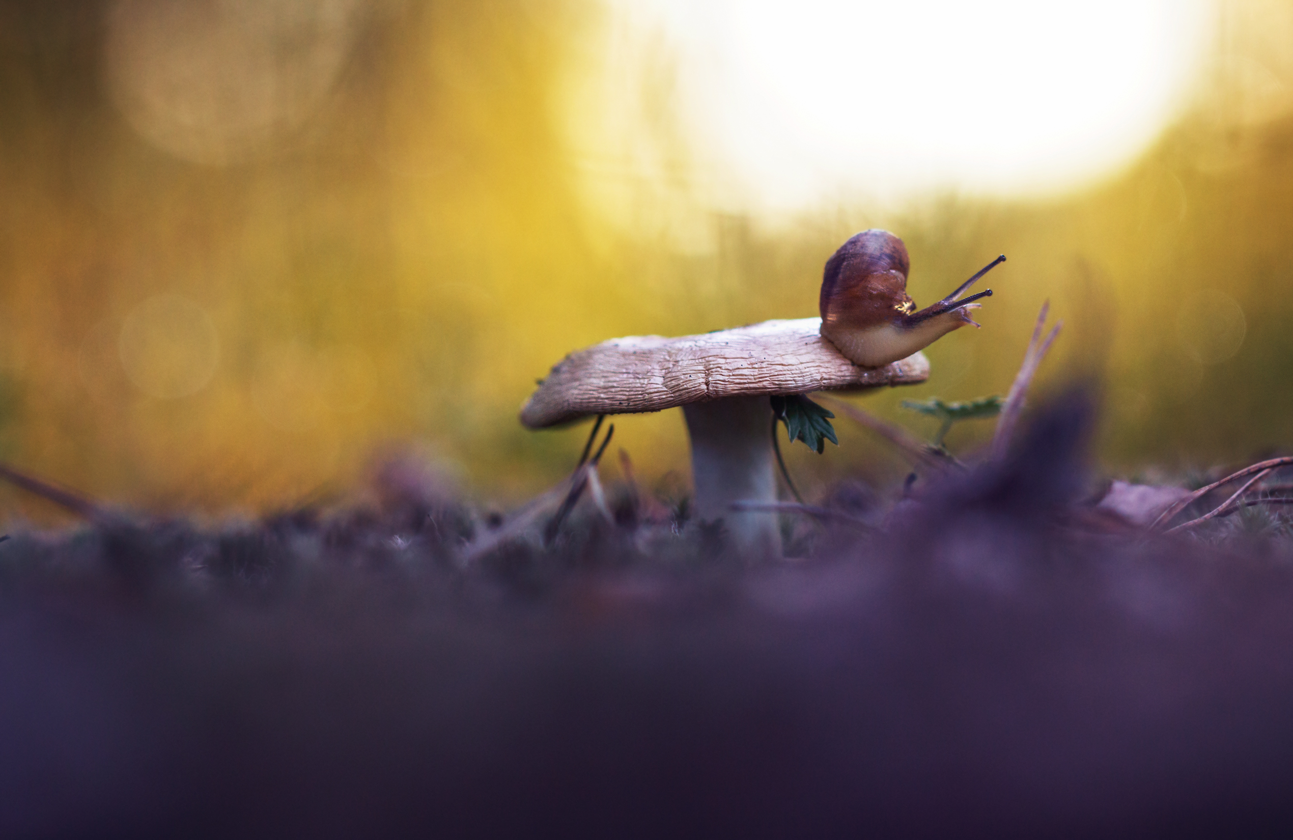Улитки да лягушки / фотограф Гудина Людмила