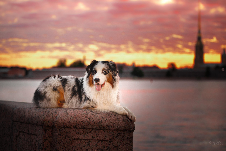 Собачья радость / фотограф Поникарова Наталия