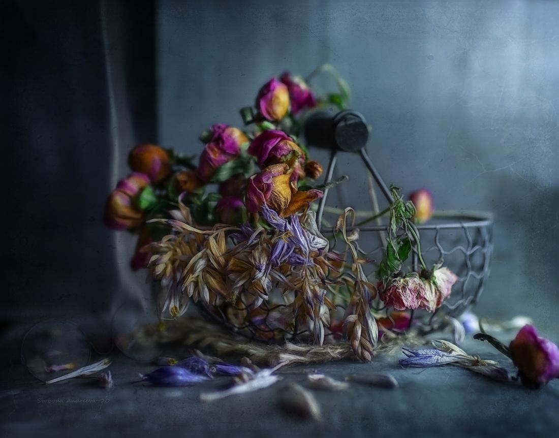 Приближаясь к сентябрю / фото Andreeva Svoboda