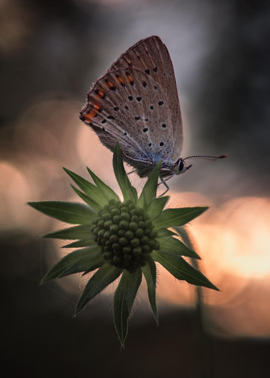 Бабочки / фото Олег Баранов