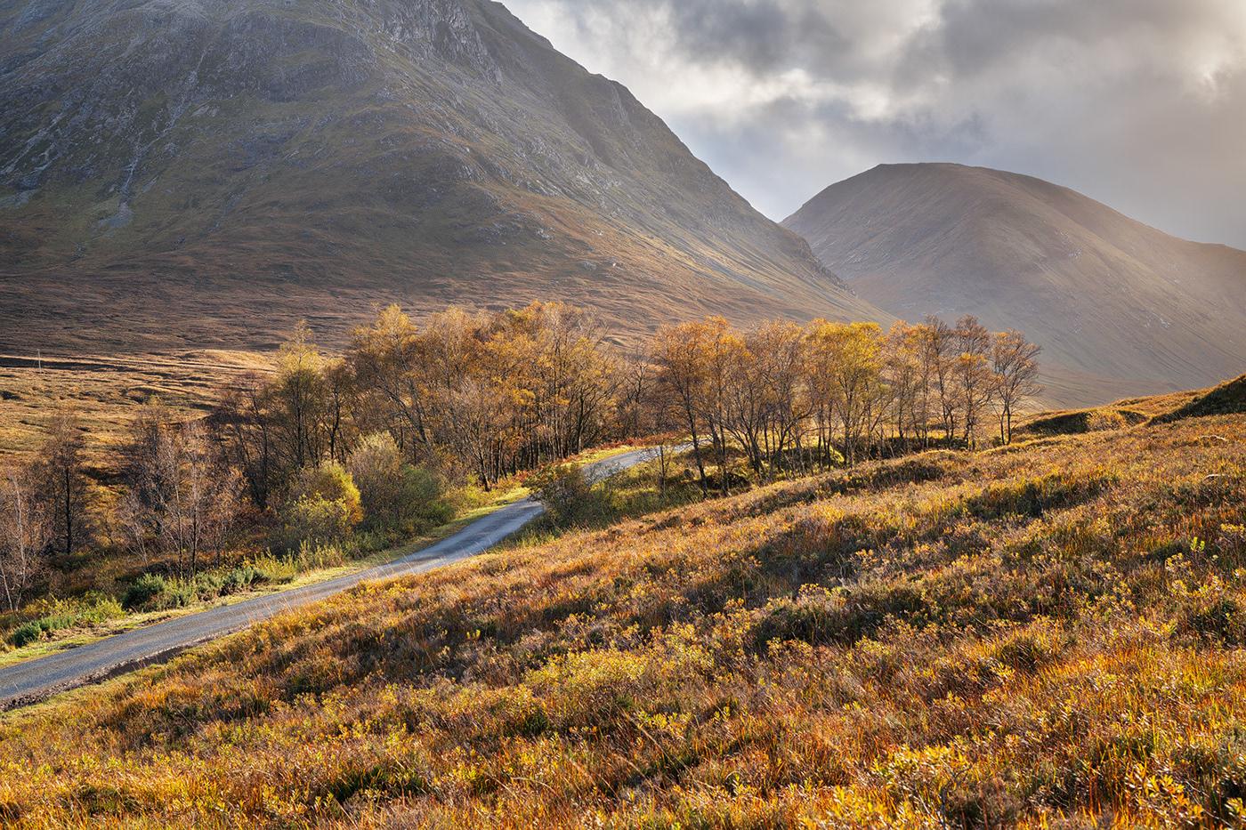 Autumn Up North (Ocher)