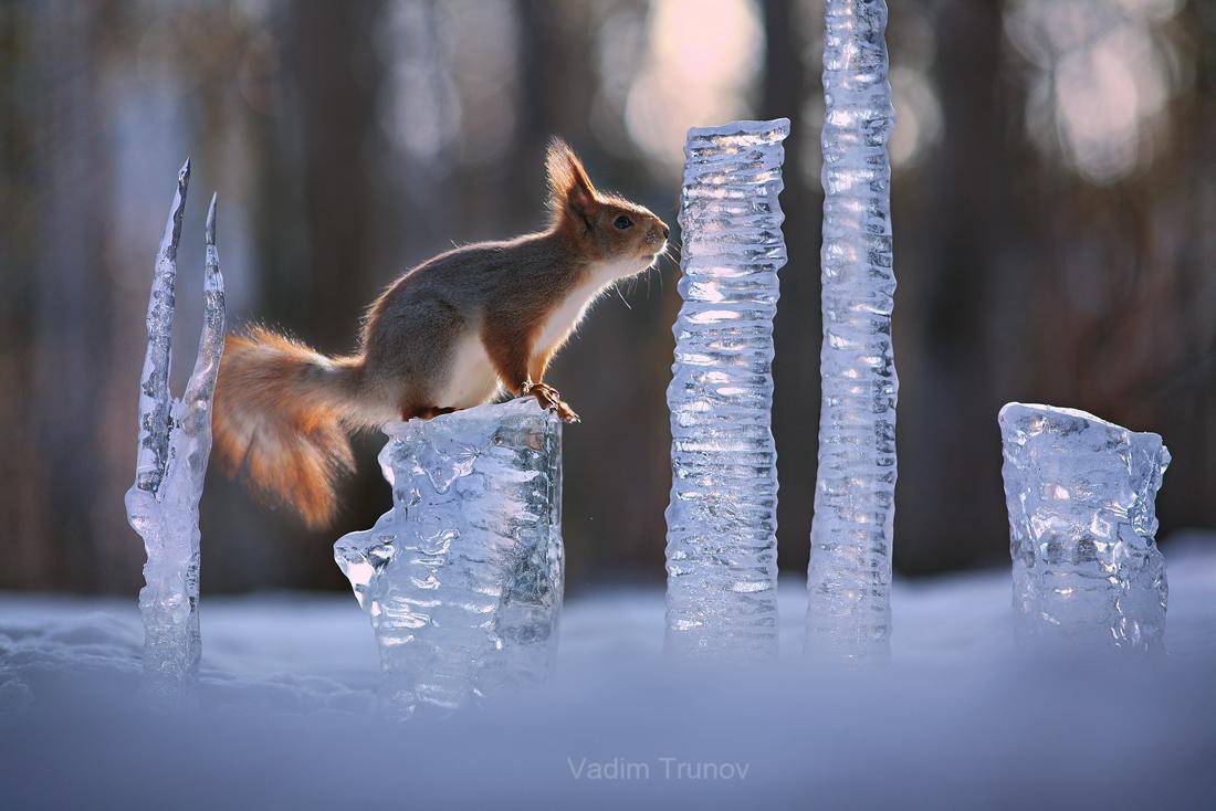 Зимний хрусталь / фотограф Вадим Трунов