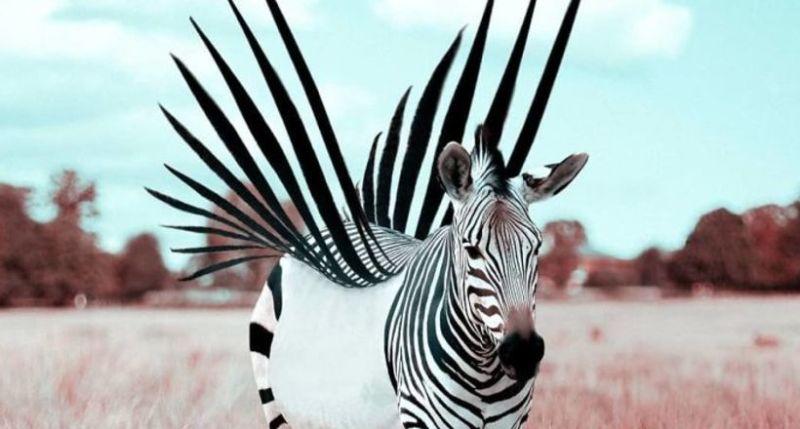 фантастические животные Julien Tabet