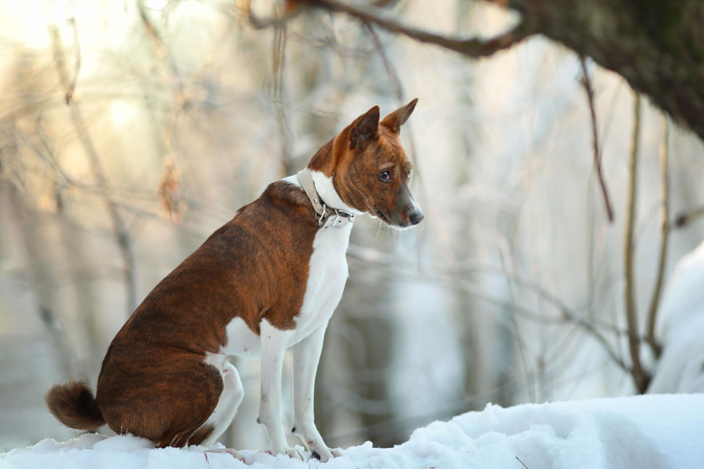 Зимние собаки / фотограф Поникарова Наталия