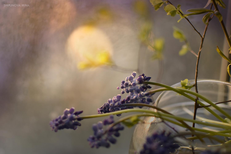 Облака цветов