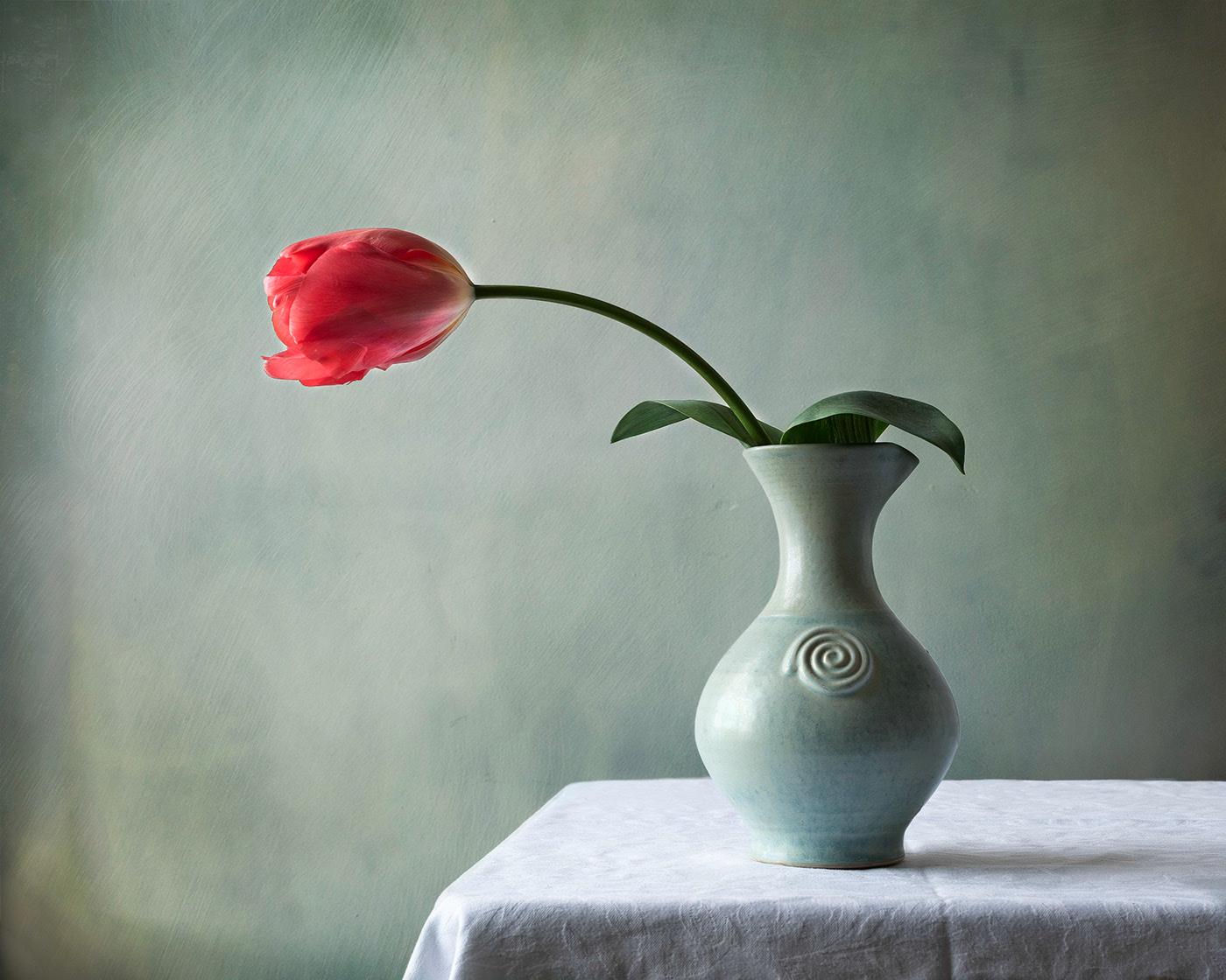 тюльпаны / фотограф Sharon Williams