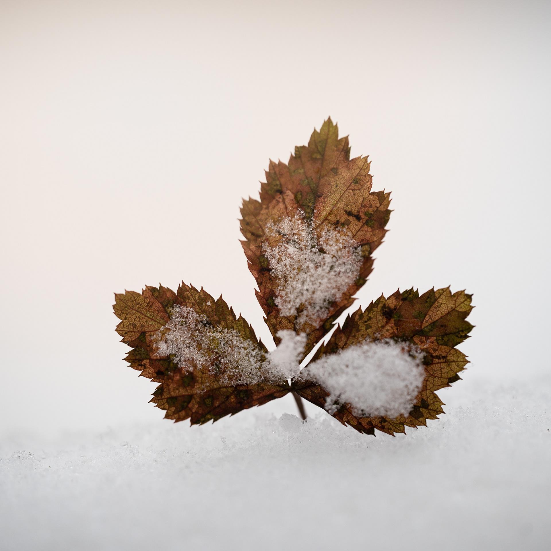 Winter Plants / фотограф Jonas Groß