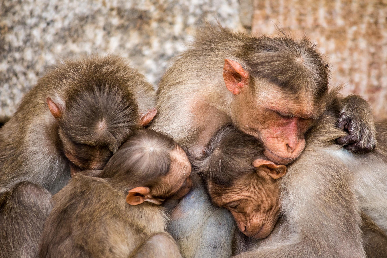Portraits of a Monkeys