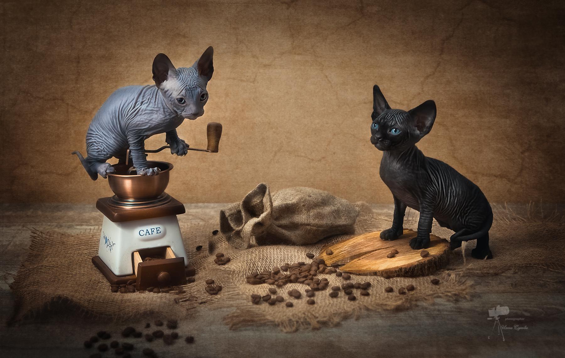 кофе энд котики