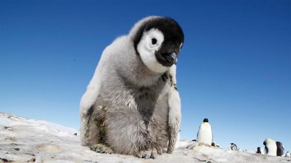 pingviny-2