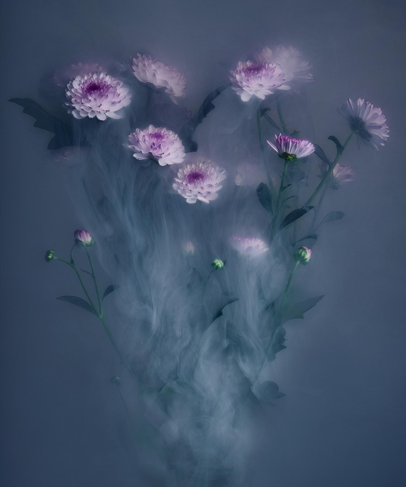 FlowerPower / фотограф Robert Peek