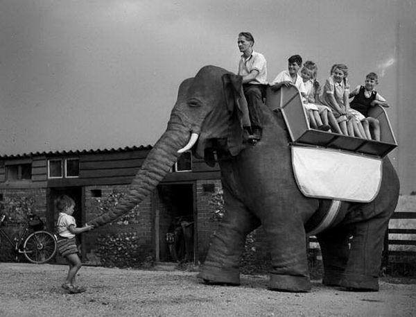 робот-слон 2