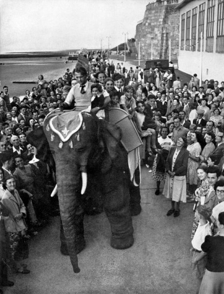 робот-слон 3
