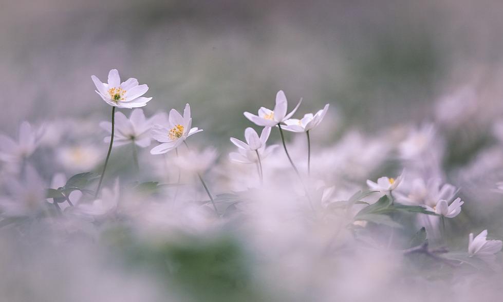 Весна - это новая жизнь