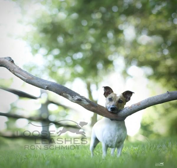забавные собаки 4