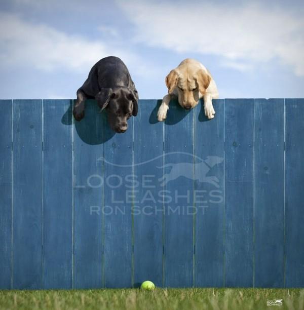 забавные собаки 10