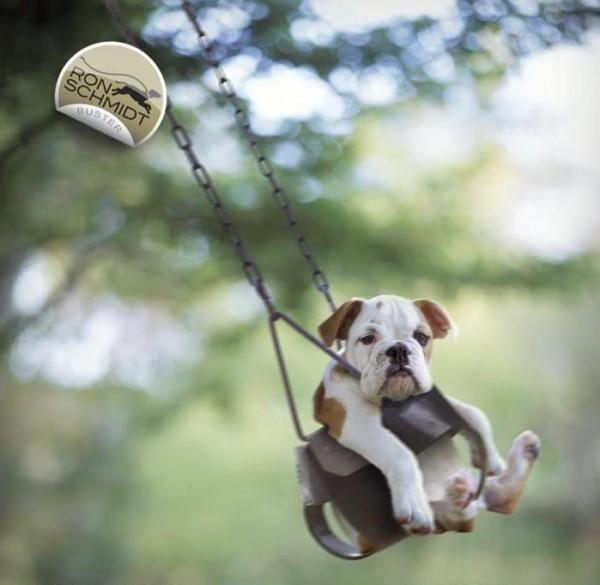 забавные собаки 12