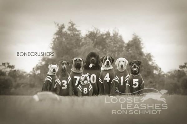 забавные собаки 15