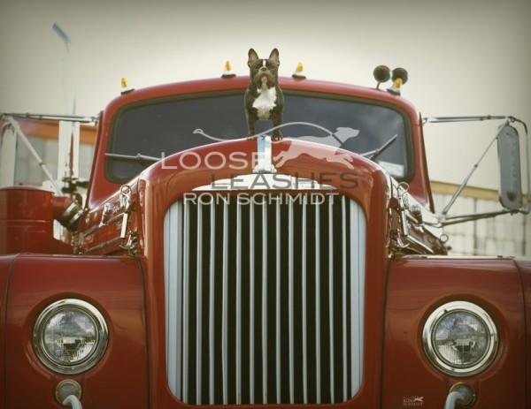забавные собаки 22