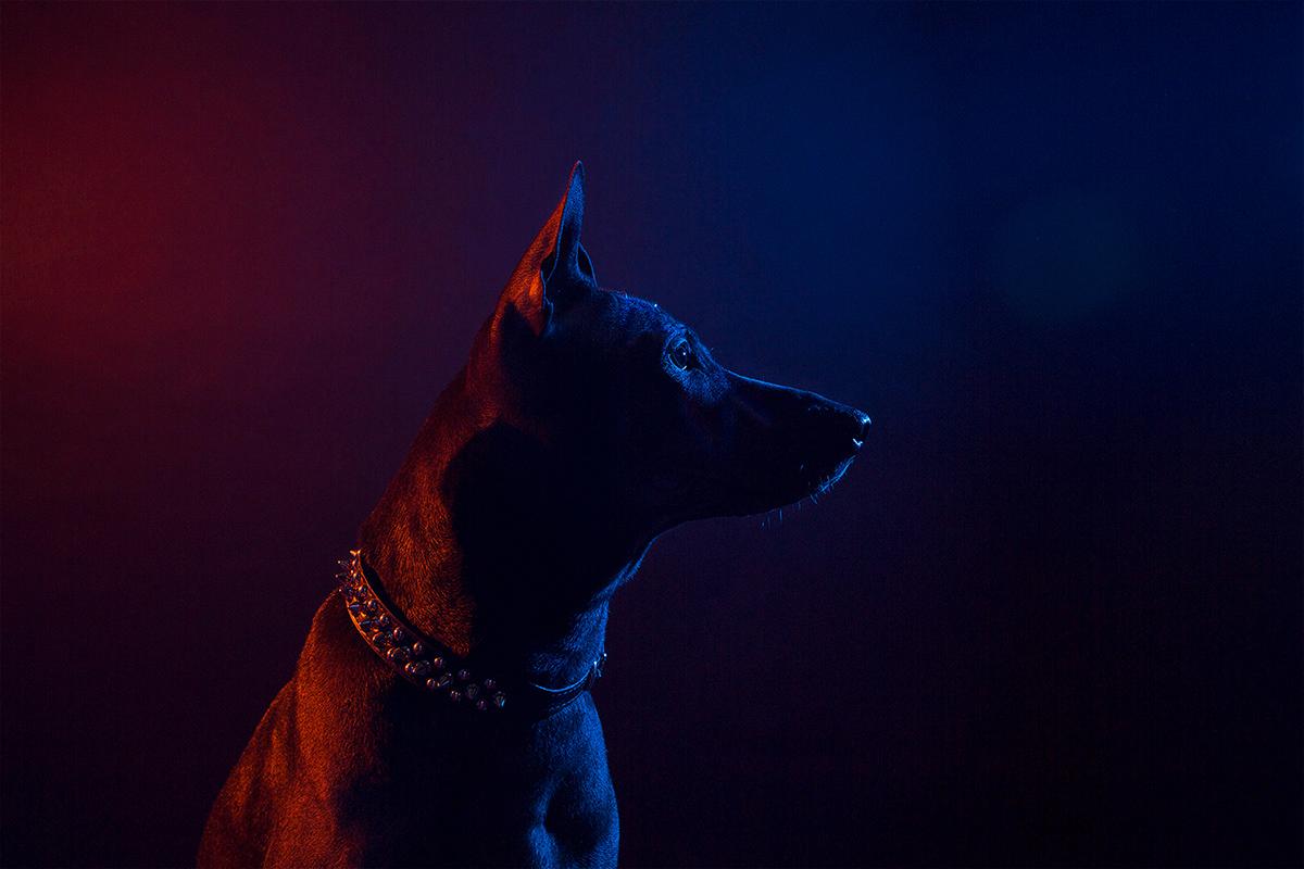 Rockstar dogs