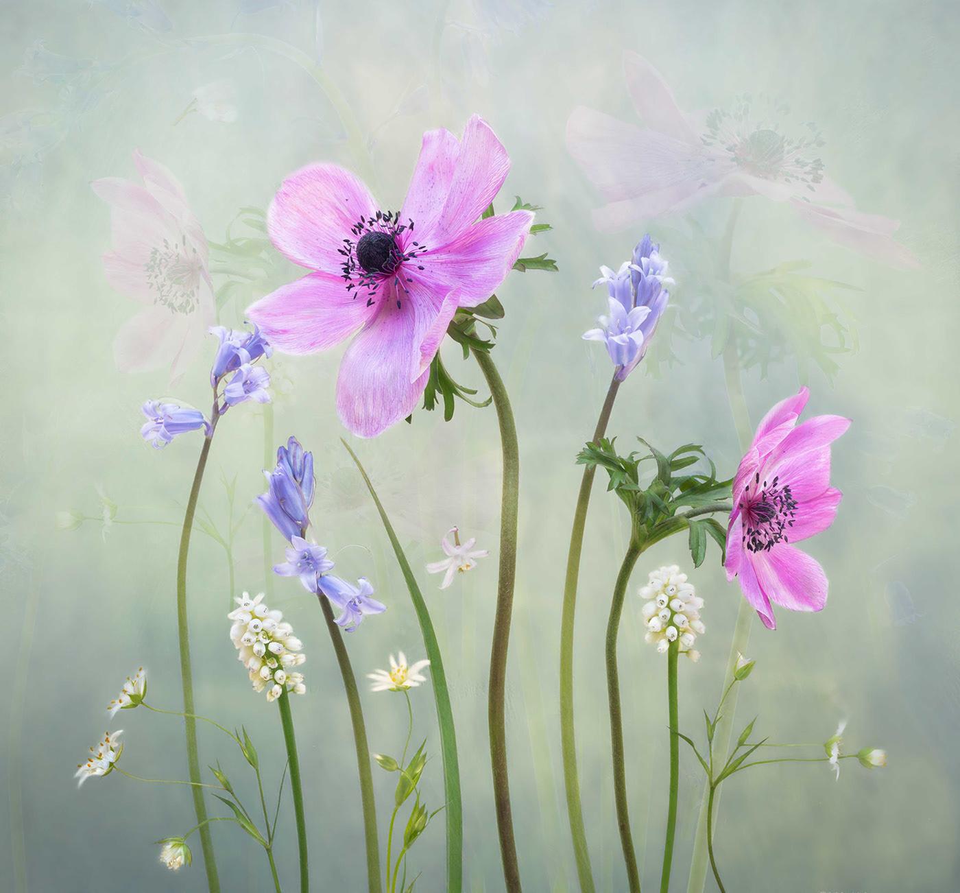 Апрельские цветы от фотографа Sharon Williams