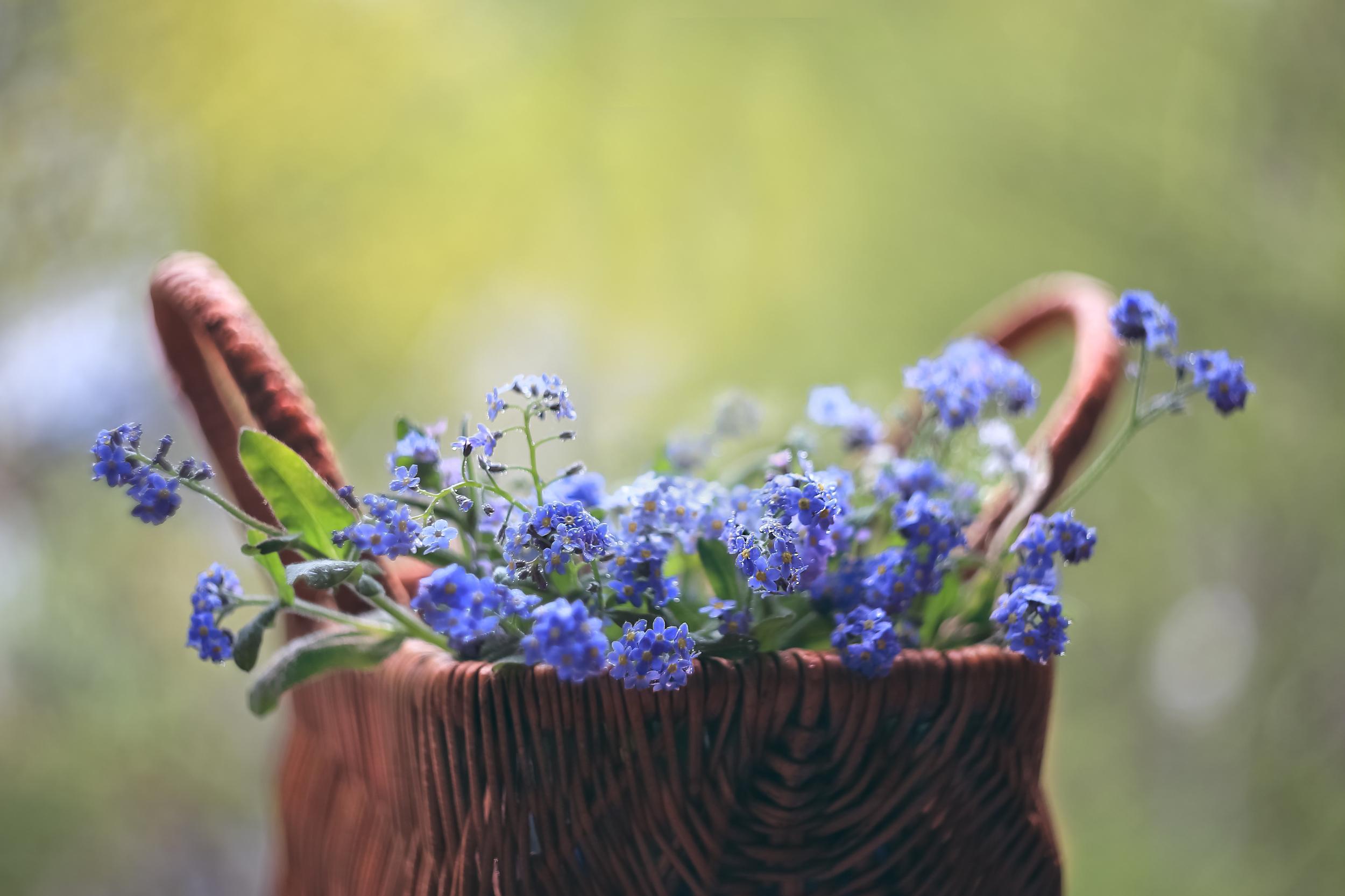 Цветы и книги / фотограф Ирина Горюкина