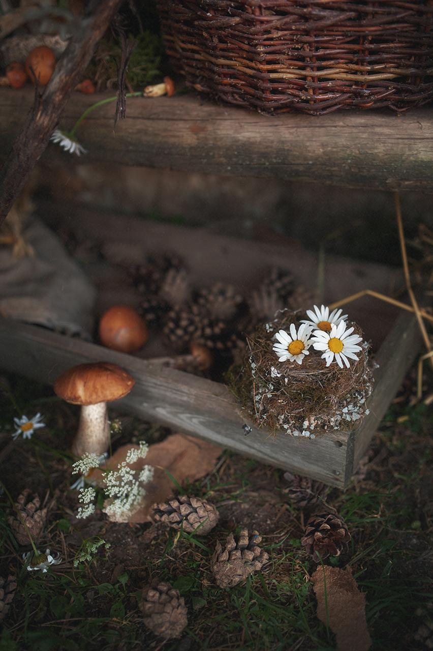 Летняя зарисовка с грибами / фотограф Мария Бабинцева