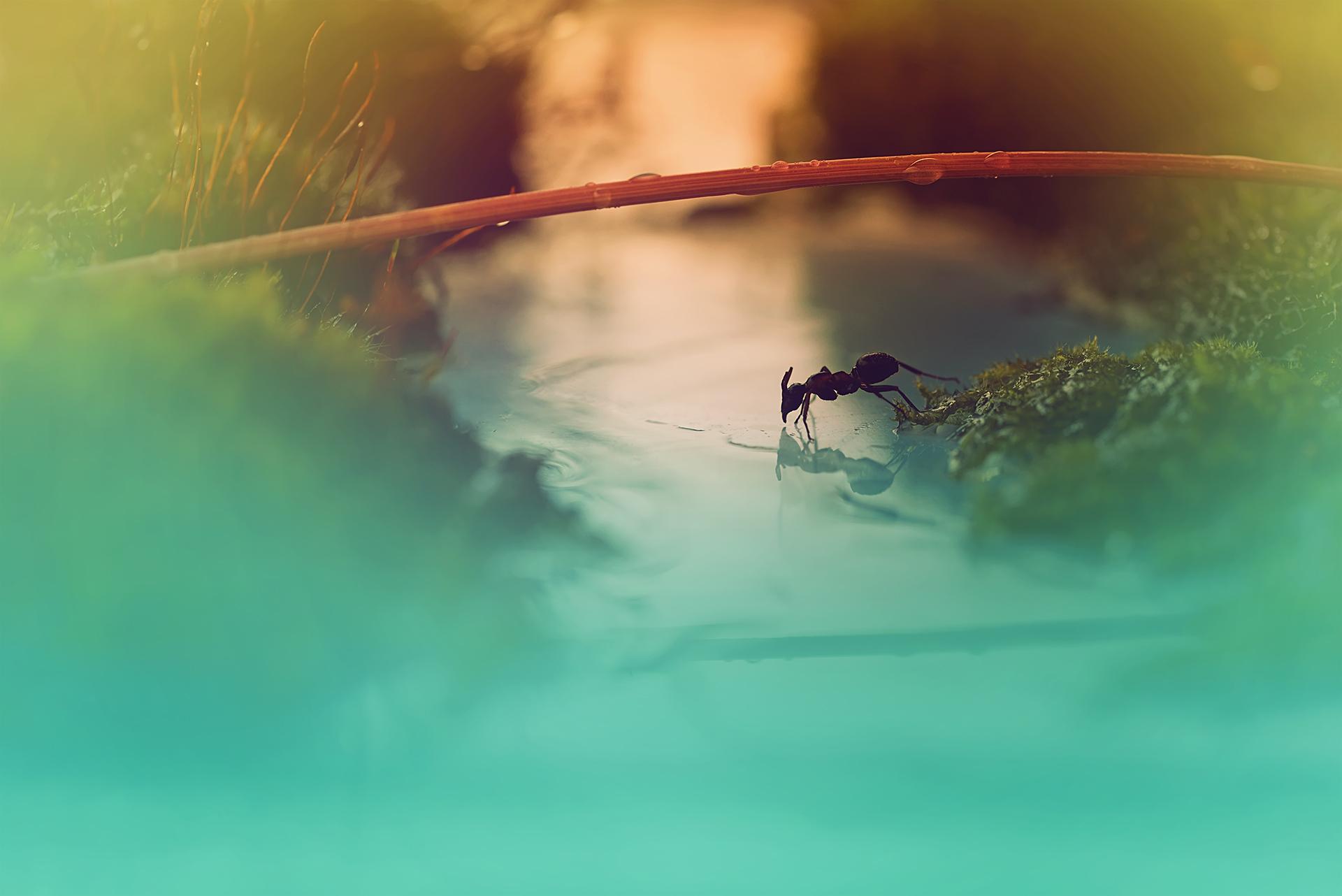 Путешествие муравья