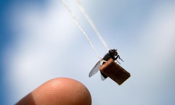 Приключения мистера Мухи (The Adventures of Mr.Fly)