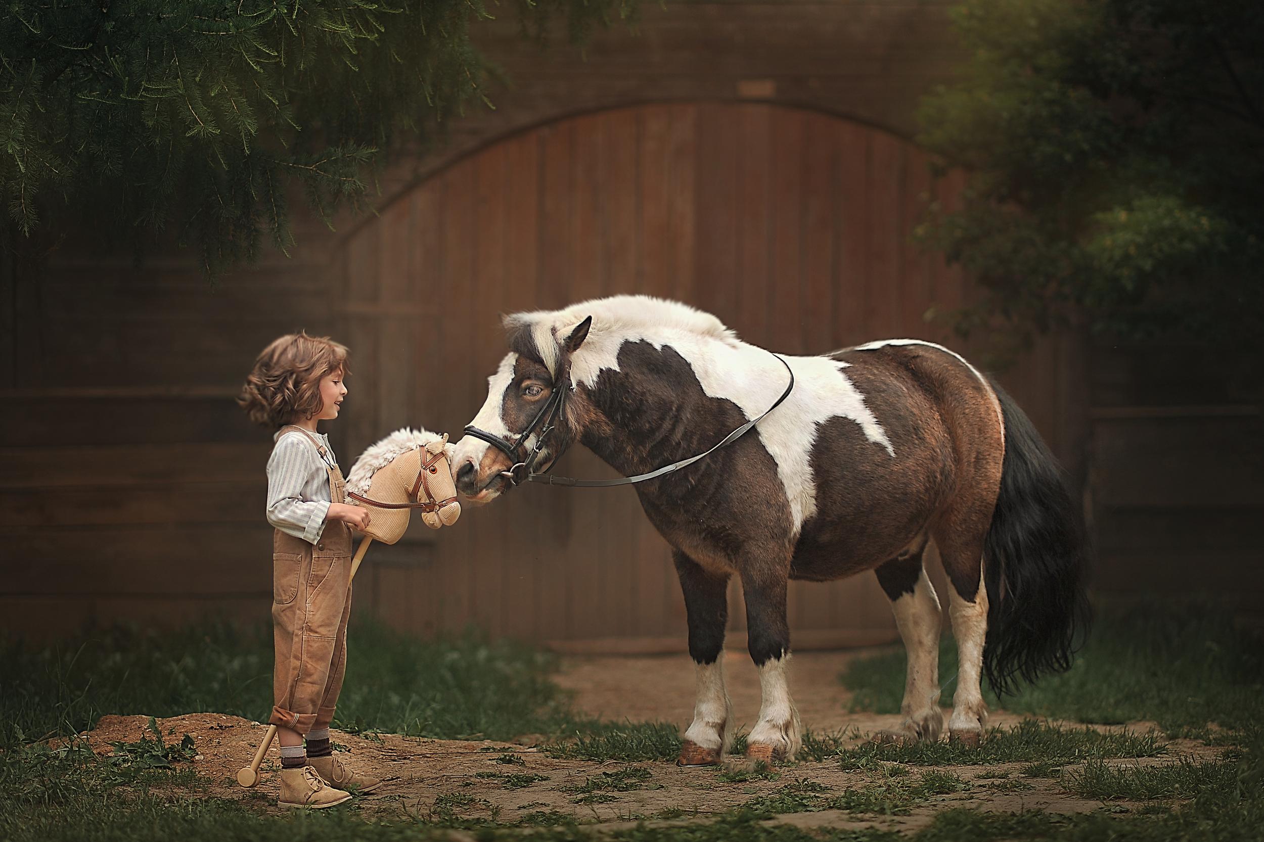 Маленькая лошадка