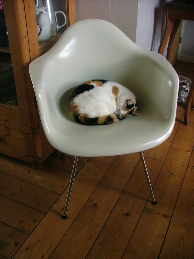 Cats 9