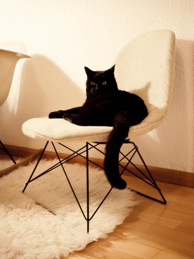 Cats 15