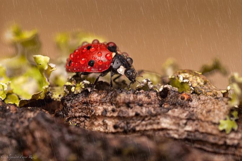Ladybugs-4