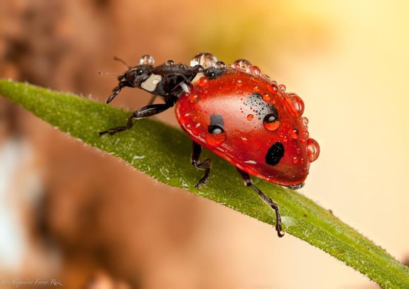 Ladybugs-5