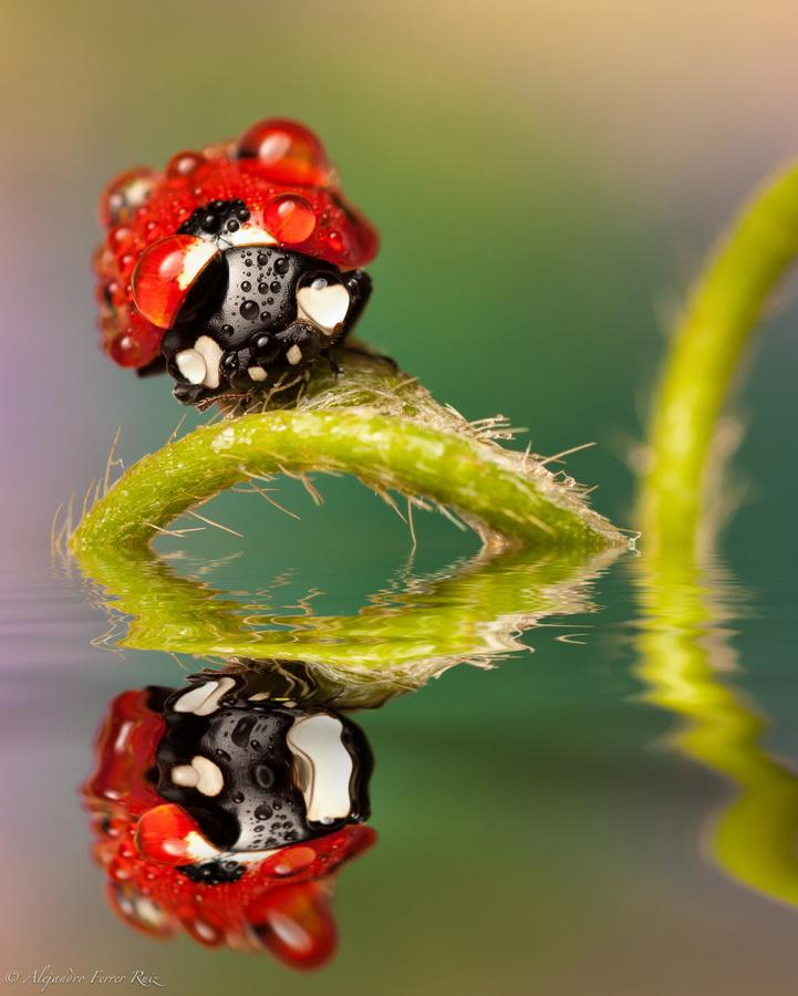Ladybugs-6